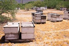 Field of Bees Stock Photography