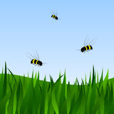 Field and bees. A field with a grass and bees against the blue sky Stock Image