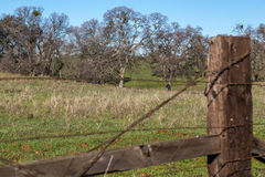 Field behind a Frence. Field with a wooden fence Royalty Free Stock Images