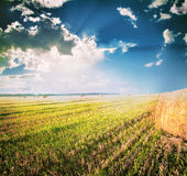Field with a beveled and cleaned in the stack of hay Royalty Free Stock Photos