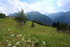 field blommaberg Arkivfoto