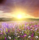 field blomman arkivbild