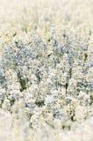 field blomman Arkivbilder