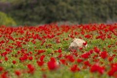 field blomman royaltyfria bilder