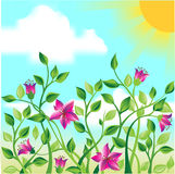 field blommor arkivfoton