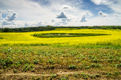 Field of blooming canola, Alberta Stock Images