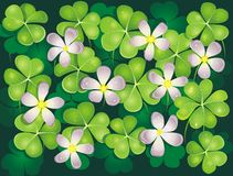 Field of blooming clovers. Background Stock Photography