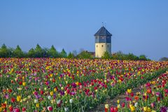 Field with blooming colorful tulips and watertower stock photography