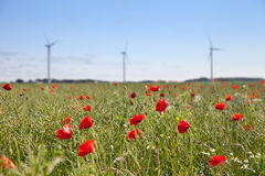 The field of blooming poppy seeds and windmills Stock Photo
