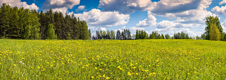 Field of blossoming dandelions with beautiful clouds over Royalty Free Stock Image