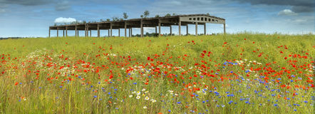 Field with blossoming flowers and abandoned agriculture building Stock Image