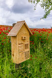 Field of blossoming red poppies with an insect hotel Stock Photos