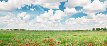 field and blue cloudy sky Stock Image