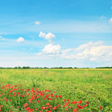 field and blue cloudy sky Royalty Free Stock Photos