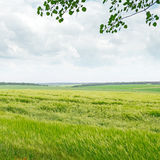Field and blue cloudy sky Royalty Free Stock Images
