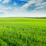 Field and blue cloudy sky Royalty Free Stock Photography