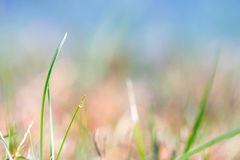 Field of Blue and Green Royalty Free Stock Photos