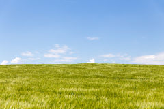 Field with blue horizon and Copy Space Stock Image