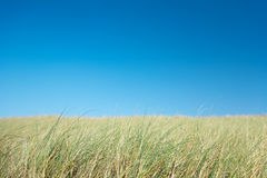 Field and blue sky Stock Photography