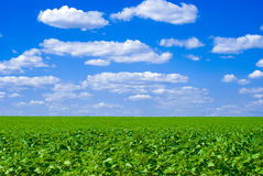 Field and blue sky Royalty Free Stock Photo