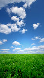 Field and a  blue sky Stock Photography
