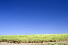 Field and Blue Sky Stock Image