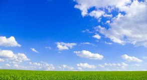 Field and blue sky Royalty Free Stock Images