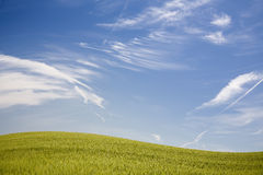 Field with blue sky Royalty Free Stock Photo