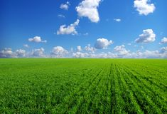 Field on  blue sky Stock Photo