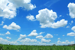 Field of the blue sky Royalty Free Stock Image