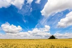 Field with a blue sky Stock Image