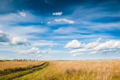 Field and blue sky with clouds Stock Image