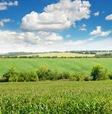 Field and blue sky Royalty Free Stock Image