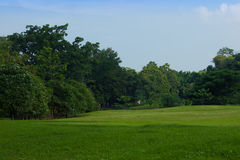 Field and blue sky. In public park Royalty Free Stock Photo