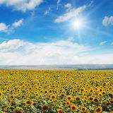 Field  , blue sky and sun Royalty Free Stock Photo