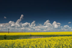 Field with blue sky and white clouds Royalty Free Stock Image