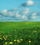 Field and blue. Spring meadow,blowballs and blue Stock Photo