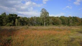 Field of bog asphodel at the Duivelshof in Losser Stock Image