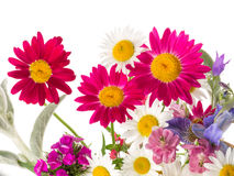 Field bouquet of bright summer Stock Photos