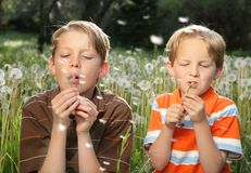Field Boys. Two young blond boys blowing on dandelions together in field of flowers Stock Photos