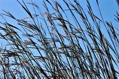 Field In The Breeze Royalty Free Stock Photography