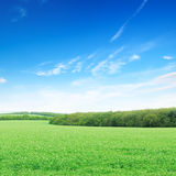 field and a bright blue sky Stock Image