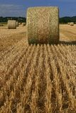 Field of bundle of straw Royalty Free Stock Photos