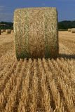 Field of bundle of straw 2 Stock Photography