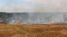 Field burning stock footage