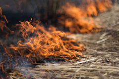 In the field burning grass, shrubs and plants are burned, land covered with dark, early spring Stock Photos