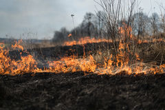 In the field burning grass, shrubs and plants are burned, land covered with dark, early spring royalty free stock images