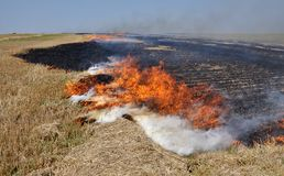 On the field burns stubble. The field burns stubble and post-fallen remains after harvesting grain crops Royalty Free Stock Photos