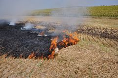 On the field burns stubble. The field burns stubble and post-fallen remains after harvesting grain crops Stock Photo