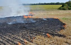 On the field burns stubble. The field burns stubble and post-fallen remains after harvesting grain crops Royalty Free Stock Photography